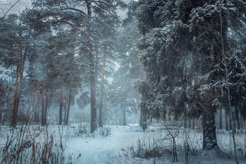 Las pod śniegiem przy chmurnym dniem obrazy royalty free