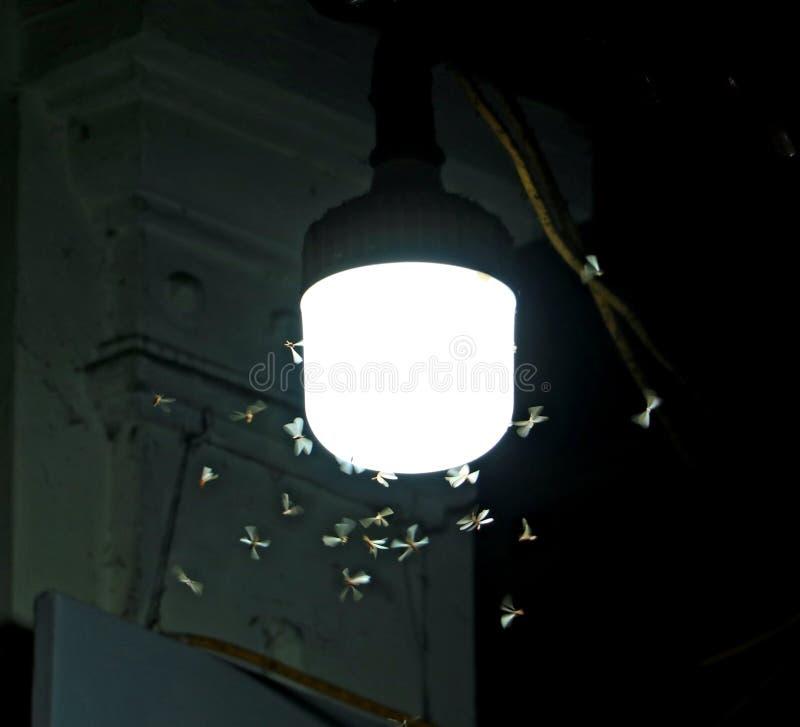 Las polillas vuelan alrededor de una lámpara de iluminación en calle imagen de archivo