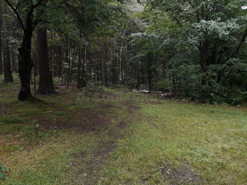 Las przy deszczowym dniem zdjęcia stock