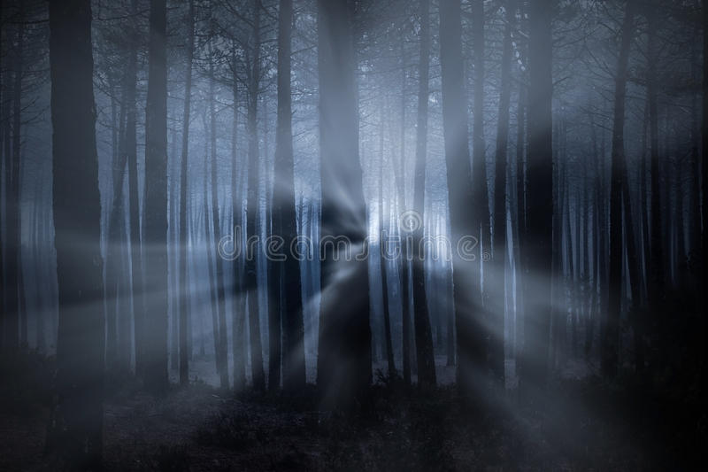 Las przy nocą zdjęcia stock