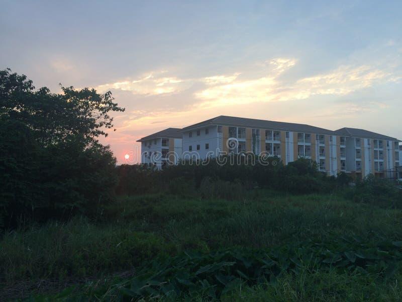 Las puestas del sol de la sombra de los árboles fotografía de archivo