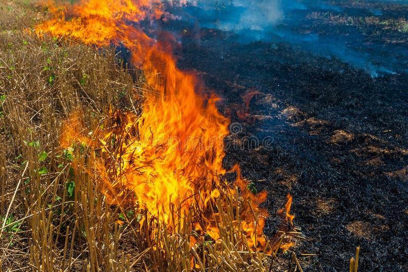 Las quemaduras del fuego stubble en el campo destruyen verano fotografía de archivo libre de regalías