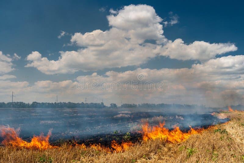 Las quemaduras del fuego stubble en el campo destruyen verano imágenes de archivo libres de regalías