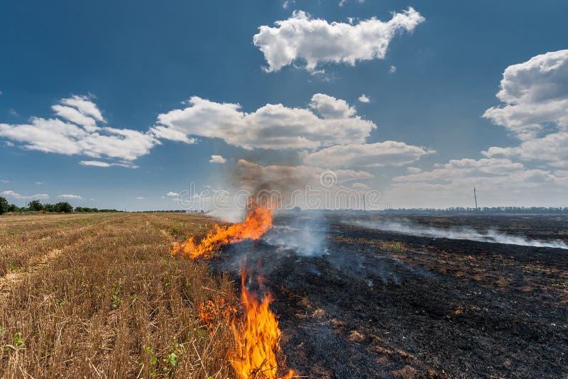 Las quemaduras del fuego stubble en el campo destruyen verano foto de archivo libre de regalías