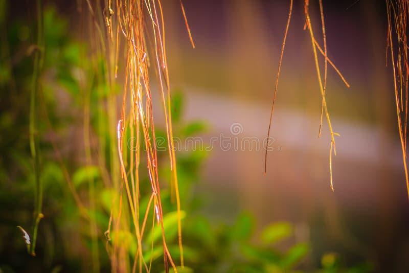Las raíces borrosas del aire del baniano en el verde salen del fondo imagen de archivo