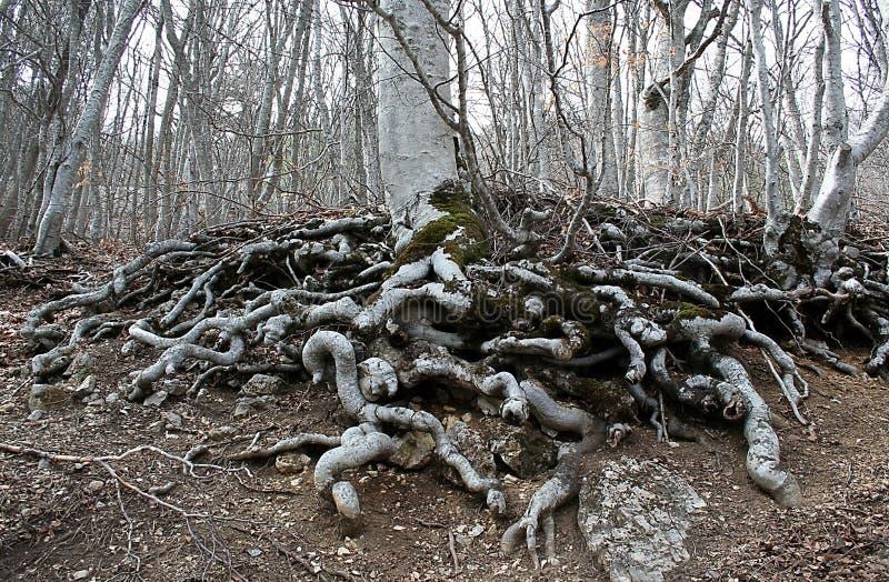 Las raíces de la tierra imagen de archivo libre de regalías
