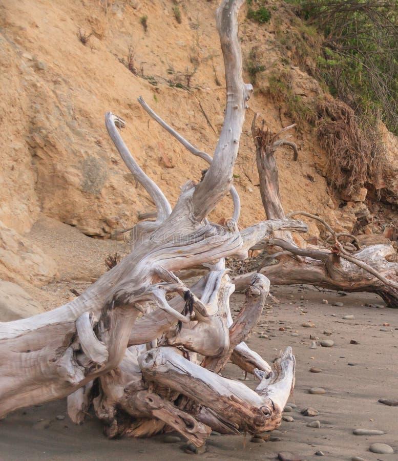 Las raíces del árbol muerto previsto agitan fotografía de archivo