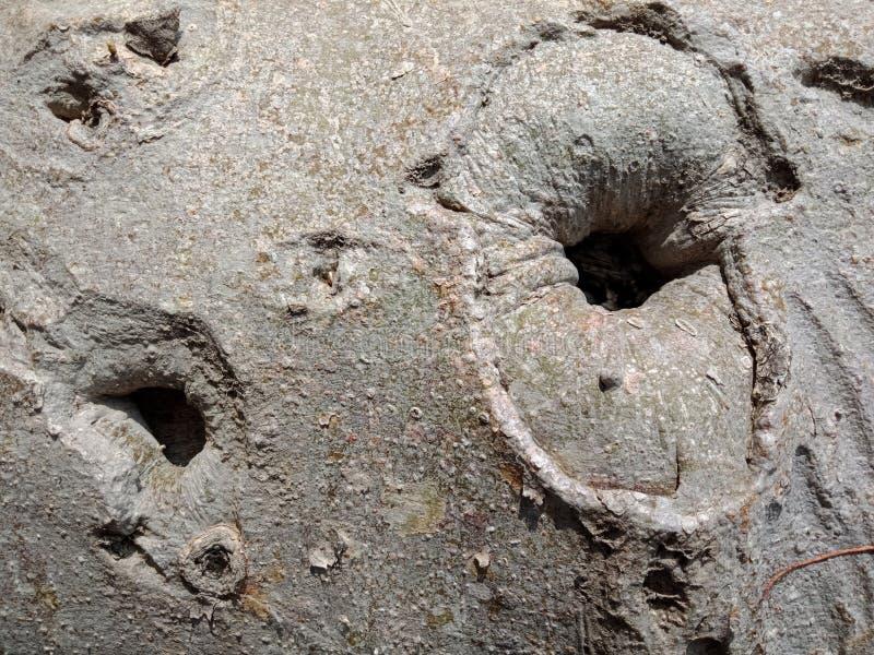 Las raíces del árbol raspan la textura, papel pintado del fondo de la creación de la naturaleza imagen de archivo libre de regalías
