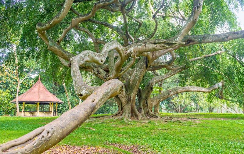 Las raíces torcidas foto de archivo libre de regalías
