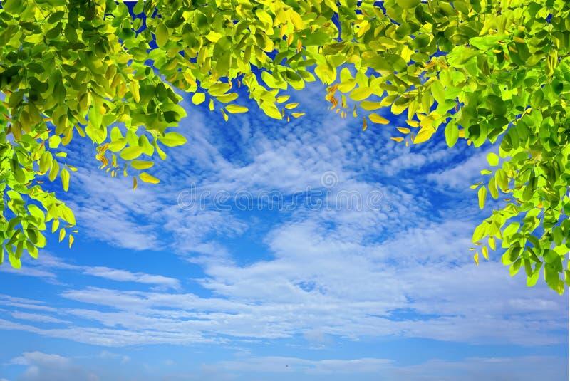 Las ramas de árbol verdes dejan el marco en el cielo azul y se nublan el fondo de la naturaleza imagen de archivo