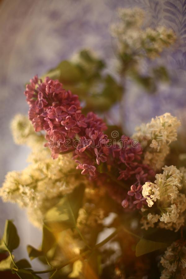 Las ramas de la sirena blanca y púrpura en un florero imagen de archivo libre de regalías