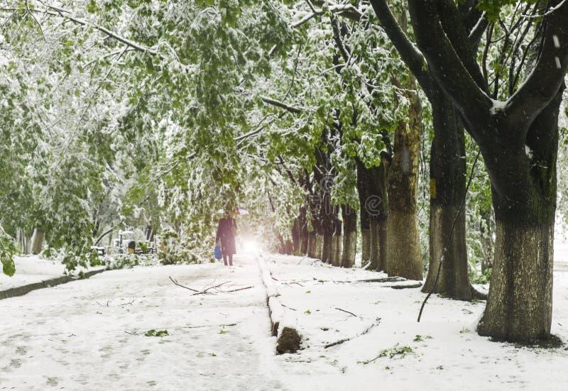 Las ramas de los árboles con las hojas verdes de la primavera se rompieron bajo el peso de nieve y de viento mojados foto de archivo
