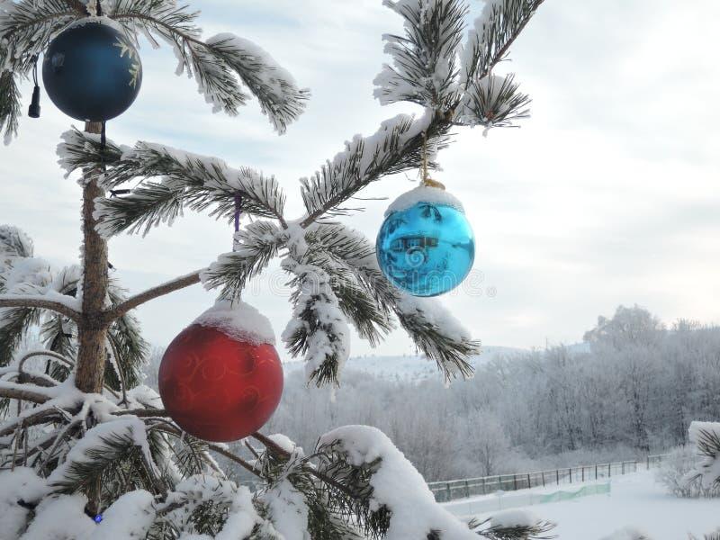 Las ramas del árbol están decoradas con grandes globos de colores en el exterior en invierno fotos de archivo libres de regalías