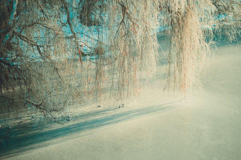 Las ramas del sauce cuelgan encima de un río congelado fotos de archivo libres de regalías