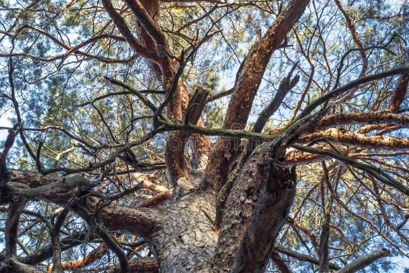 Las ramas que tuercen de un árbol grande fotografía de archivo libre de regalías
