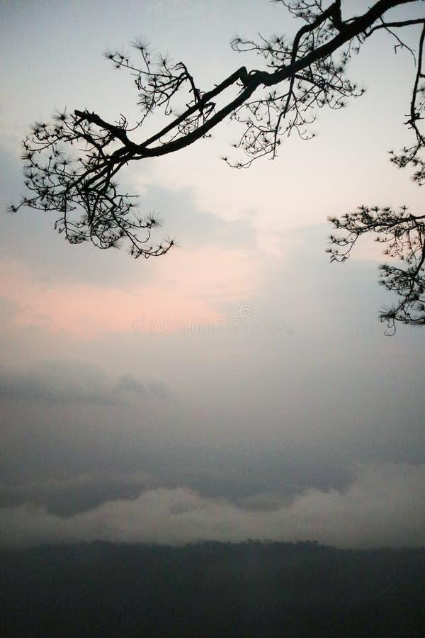 Las ramas son la naturaleza a ser el mejor imagenes de archivo