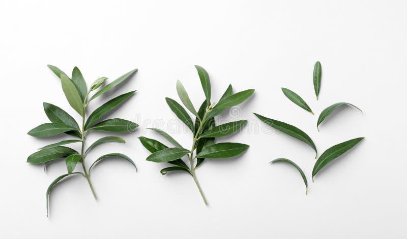 Las ramitas con la aceituna verde fresca se van en el fondo blanco imagen de archivo libre de regalías