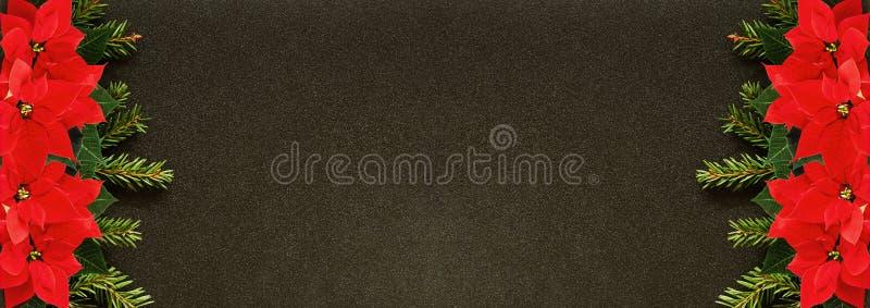 Las ramitas del abeto y las flores de la poinsetia afilan en fondo negro fotografía de archivo
