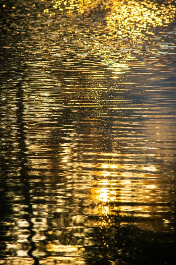 Las reflexiones de oro de la charca de la hora riegan el extracto imagenes de archivo