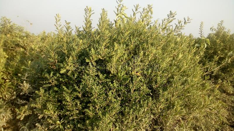 Las roślina fotografia royalty free