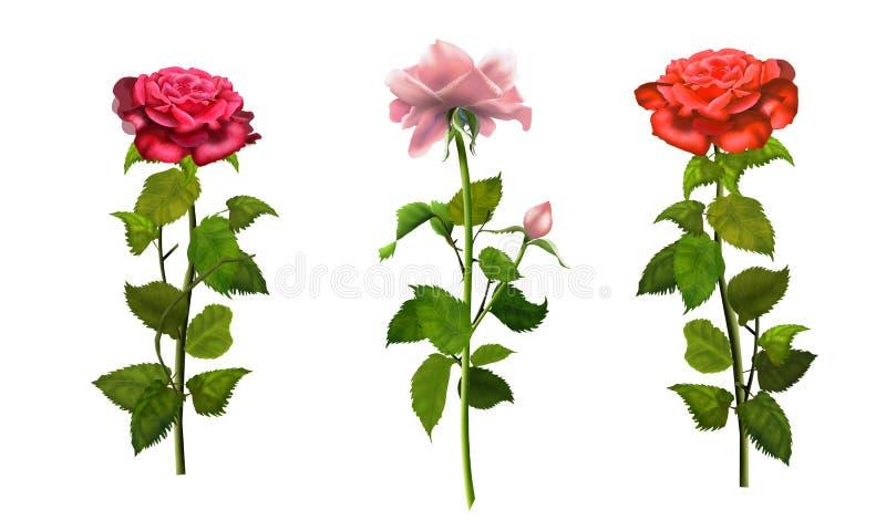 Las rosas aislaron el papel pintado romántico determinado stock de ilustración