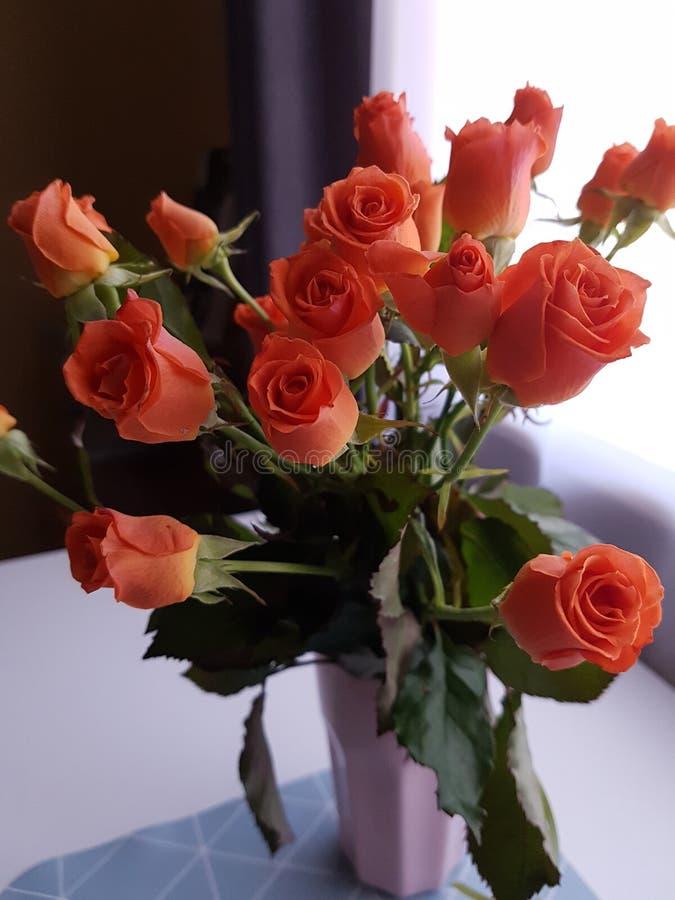 Las rosas anaranjadas florecen en la taza en estilo del scandi imagenes de archivo