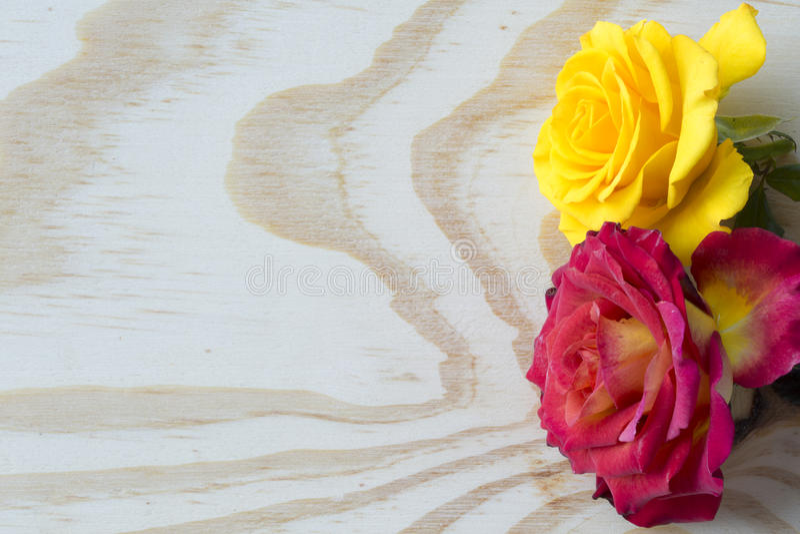 Las rosas blancas y rojas en blanco acodaron el fondo foto de archivo