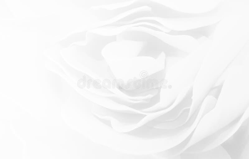 Las rosas dulces del color florecen en el estilo de la falta de definición para el fondo fotografía de archivo