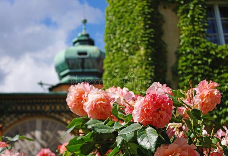 Las rosas en Lancut se escudan, Subcarpacia, Polonia fotos de archivo