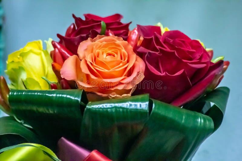 Las rosas hermosas, usadas en amor o amistad, son apreciadas por las mujeres ciertamente que son hermosas como ellas imágenes de archivo libres de regalías