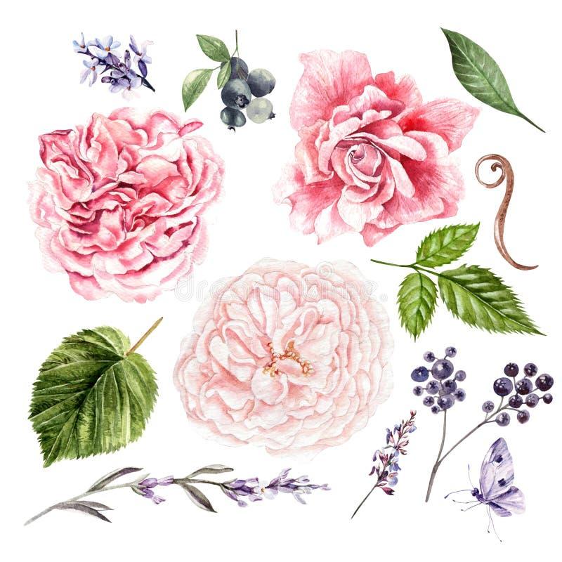 Las rosas, la lavanda y las hojas, acuarela, pueden ser utilizadas para la tarjeta de felicitación, tarjeta de la invitación para stock de ilustración