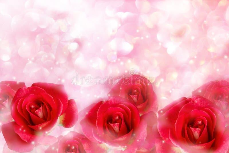 Las rosas rojas en rosa en colores pastel suave romántico maravilloso gotean el bokeh foto de archivo libre de regalías
