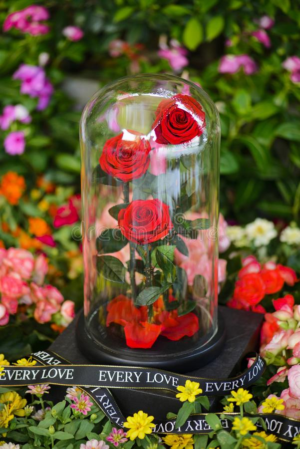 Las rosas rojas eternas en el frasco en el jardín con la otra flor imágenes de archivo libres de regalías