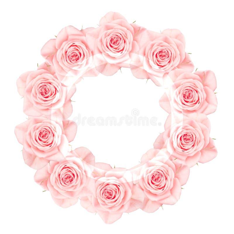 Las rosas rosadas arreglaron en un círculo, aislado en blanco fotos de archivo