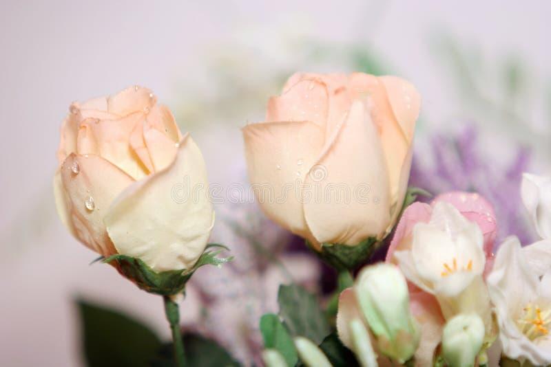 Las rosas rosadas hermosas se cierran para arriba fotografía de archivo