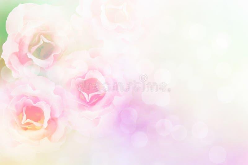 Las rosas rosadas suaves florecen el fondo de la tarjeta del día de San Valentín de la frontera del vintage imagenes de archivo