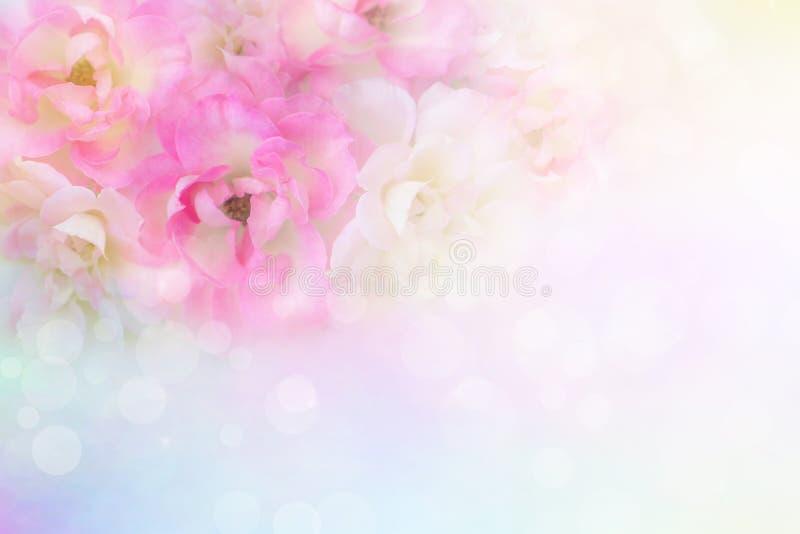 las rosas rosadas y blancas románticas florecen el fondo del vintage para la tarjeta del día de San Valentín fotografía de archivo