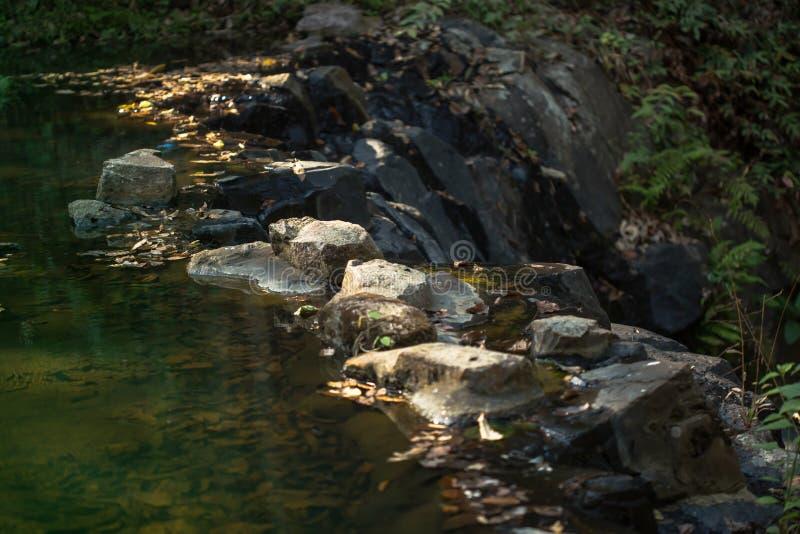 Las, rzeka, wiosna - Bie??ca woda, woda, las obrazy royalty free