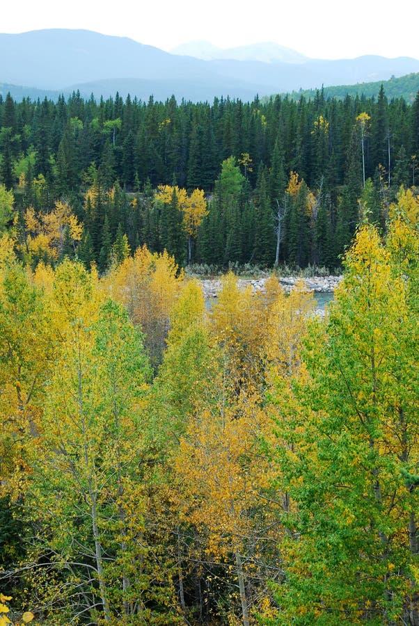 las rzeki dolina fotografia stock