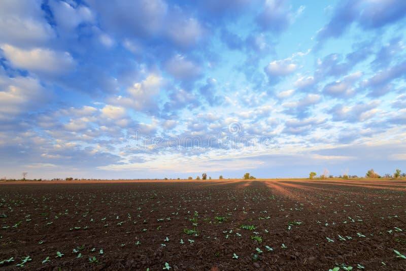 Las semillas de la cosecha futura imagenes de archivo