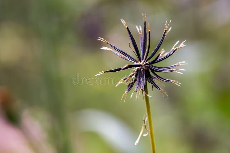 Las semillas de la se?al del mendigo de punta dirigen imagenes de archivo