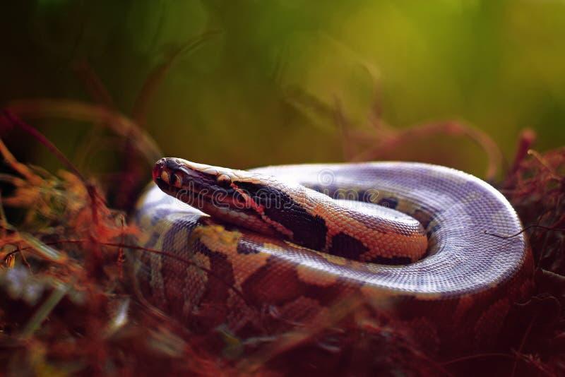 Las serpientes fotografía de archivo