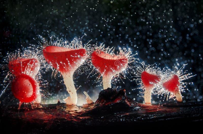 Las setas de Champán pueden ser encontradas en los bosques que son totalmente naturales Es una taza en forma de hongo formada con fotografía de archivo