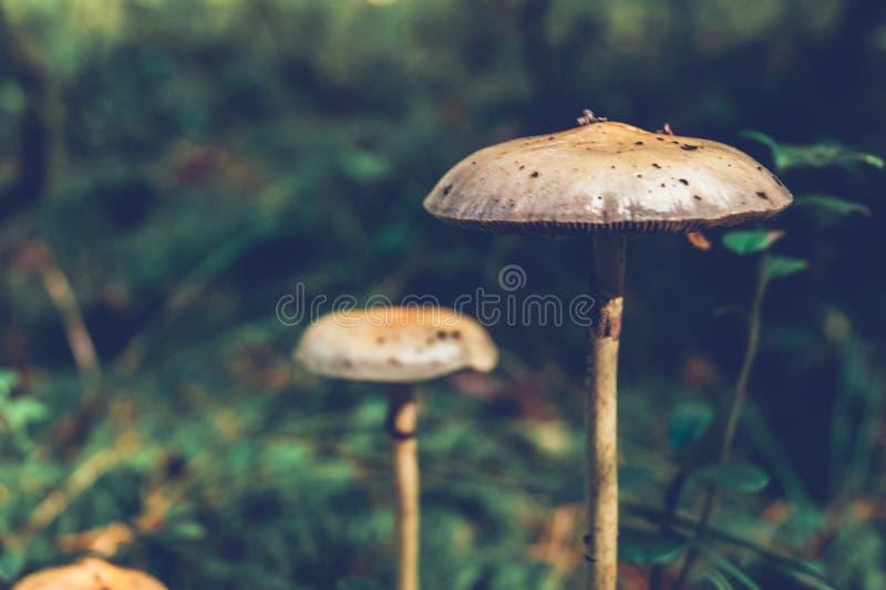 Las setas en el bosque son similares a UFOs foto de archivo