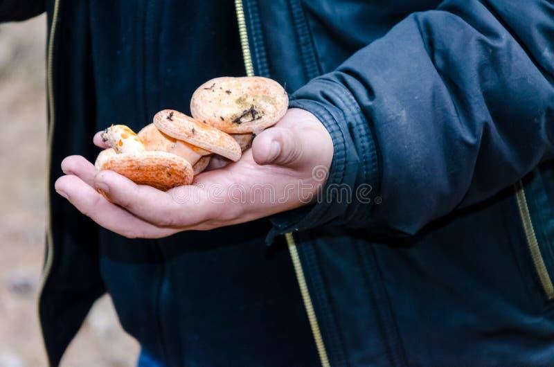 Las setas que crecen en el bosque mienten en la mano fotografía de archivo libre de regalías