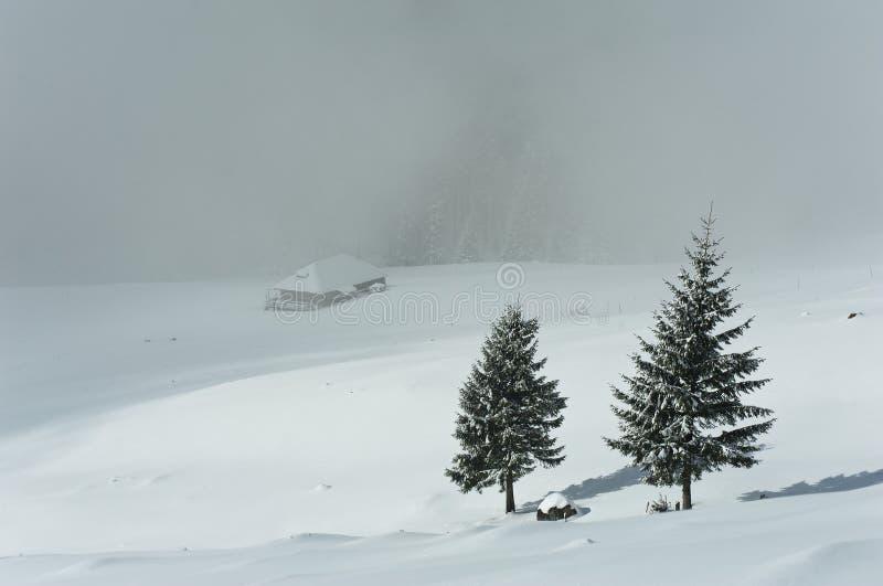 las snowed obrazy stock
