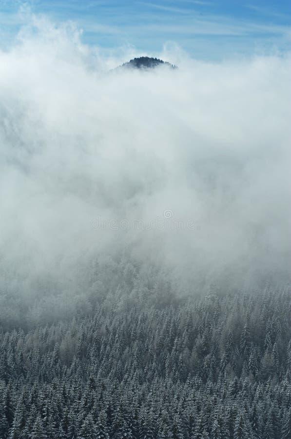 las snowed zdjęcie royalty free