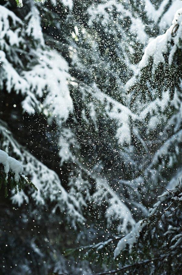 las snowed zdjęcia stock
