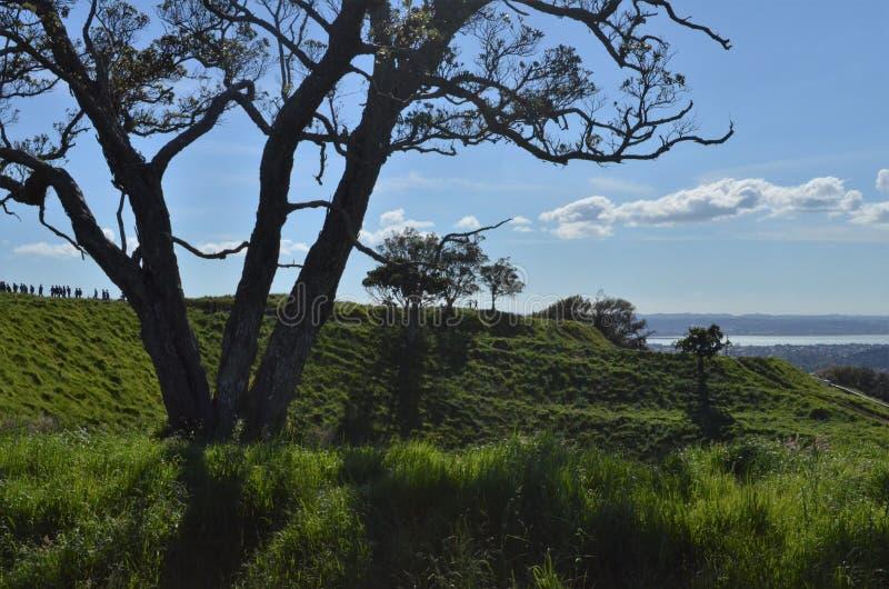 Las sombras de árboles en el ` s de Auckland montan Eden fotos de archivo