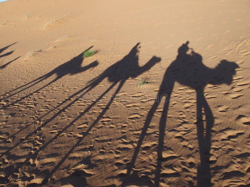 Las sombras de la caravana de los camellos en las dunas arenosas del ERGIO CHEBBI del desierto del Sáhara ajardinan en el pueblo  imagenes de archivo